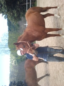 vm caballo